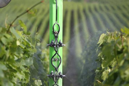 Les viticulteurs doivent être attentifs aux résistances des produits phytos qu'ils appliquent. © J-C GUTNER