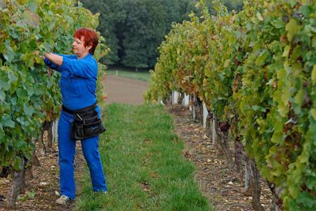 Unesco : des chercheurs veulent l'inscription des vins de terroirs. © J. CHABANNE