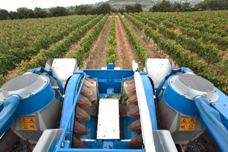 A cause d'une faible récolte, les prix du raisin flambent. ©P.PARROT