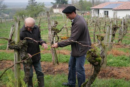 Les vignes classées, situées sur la commune de Sarragachies (Gers), auraient 150, voire 200 ans. © F. Graminsky