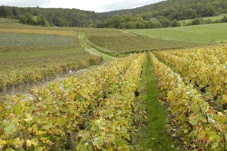 Pollution par d'anciens herbicides : l'eau interdite de consommation à Damery © P. CRAPON