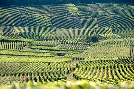Champagne : seize viticulteurs certifiés Terra Vitis. © P. GLEIZES