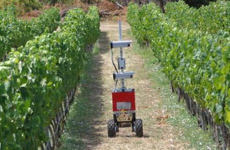 Le robot Vinbot se déplace en totale autonomie entre les rangs pour scruter le feuillage en temps réel. ©C.LOPES/ISA