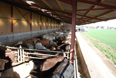 Grand est comptoir agricole et cac un pied dans l - Comptoir agricole bas rhin ...