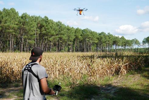 Ovalie Innovation et Reflet du Monde effectuent des essais de semis de couverts par drone sur maïs, en présence des responsables agronomiques et des techniciens de Maïsadour et Vivadour. © OVALIE INNOVATION